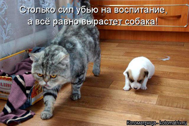 Котоматрица: Столько сил убью на воспитание, а всё равно вырастет собака!