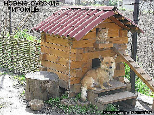 Котоматрица: новые русские питомцы