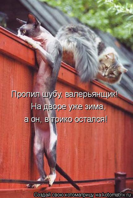 Котоматрица: На дворе уже зима, Пропил шубу, валерьянщик! а он, в трико остался!