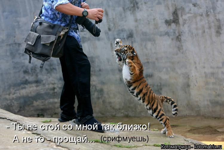 Котоматрица: - Ты не стой со мной так близко! А не то - прощай...  (срифмуешь)