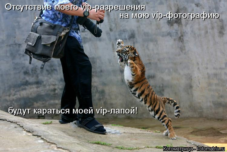 Котоматрица: Отсутствие моего vip-разрешения  на мою vip-фотографию  будут караться моей vip-лапой!