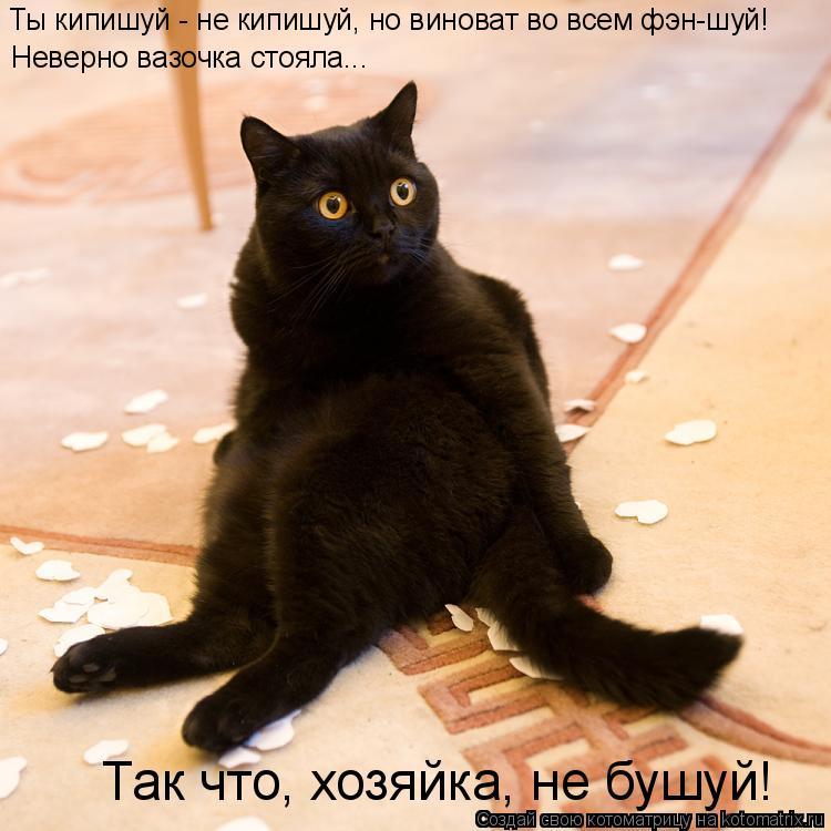 Котоматрица: Ты кипишуй - не кипишуй, но виноват во всем фэн-шуй! Неверно вазочка стояла... Так что, хозяйка, не бушуй!