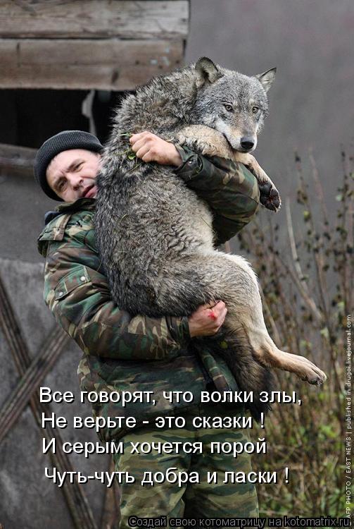 Котоматрица: Все говорят, что волки злы, Не верьте - это сказки ! И серым хочется порой Чуть-чуть добра и ласки !