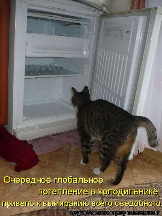Котоматрица: Очередное глобальное  потепление в холодильнике привело к вымиранию всего съедобного.