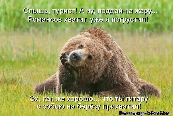 Котоматрица: Слышь, турист! А ну, поддай-ка жару... Романсов хватит, уже я погрустил! Эх, как же хорошо... что ты гитару с собою на берёзу прихватил!