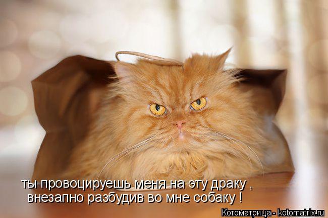 Котоматрица: ты провоцируешь меня на эту драку , внезапно разбудив во мне собаку !
