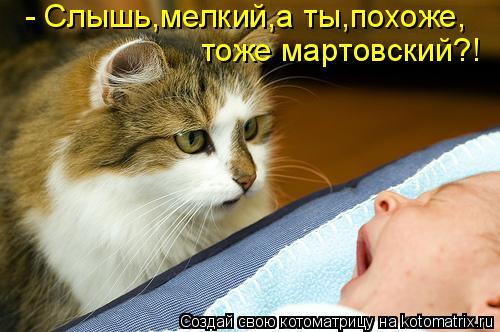 Котоматрица: - Слышь,мелкий,а ты,похоже, тоже мартовский?!