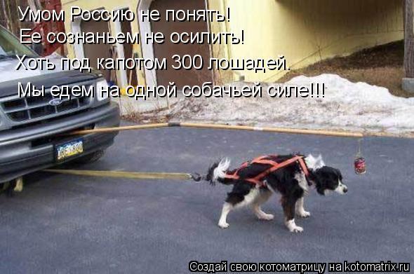 Котоматрица: Умом Россию не понять! Ее сознаньем не осилить! Хоть под капотом 300 лошадей. Мы едем на одной собачьей силе!!!