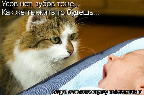 Котоматрица: Усов нет, зубов тоже.. Как же ты жить то будешь...