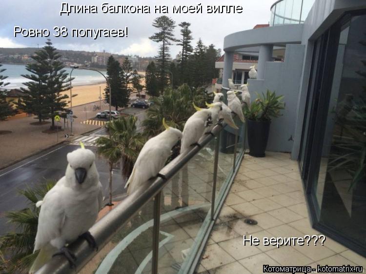 Котоматрица: Длина балкона на моей вилле Ровно 38 попугаев! Не верите???