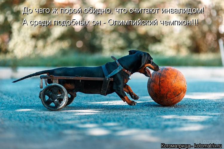Котоматрица: До чего ж порой обидно, что считают инвалидом! А среди подобных он - Олимпийский чемпион!!!