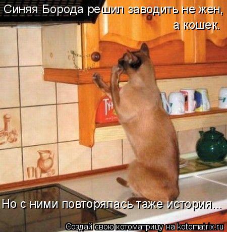 Котоматрица: Синяя Борода решил заводить не жен,  а кошек. Но с ними повторялась таже история...