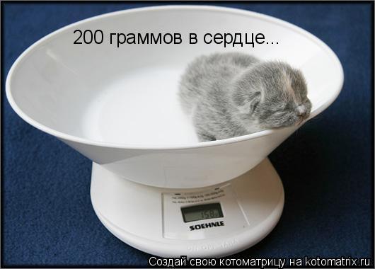Котоматрица: 200 граммов в сердце...