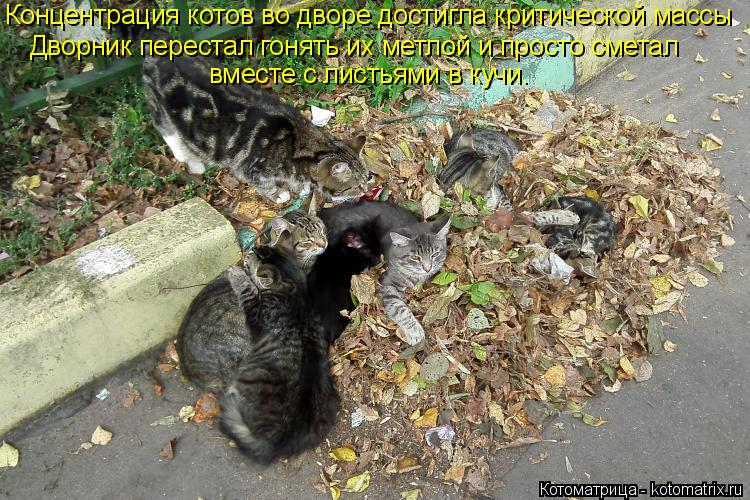 Котоматрица: Концентрация котов во дворе достигла критической массы Дворник перестал гонять их метлой и просто сметал  вместе с листьями в кучи.