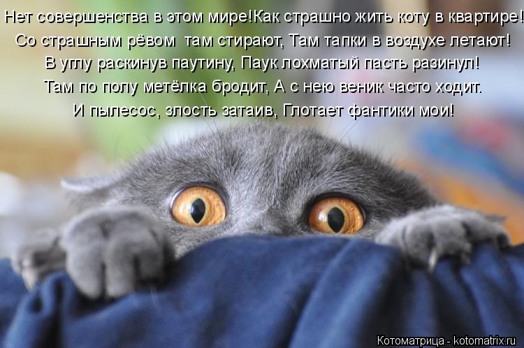 Котоматрица: Нет совершенства в этом мире!Как страшно жить коту в квартире! Со страшным рёвом  там стирают, Там тапки в воздухе летают! В углу раскинув па