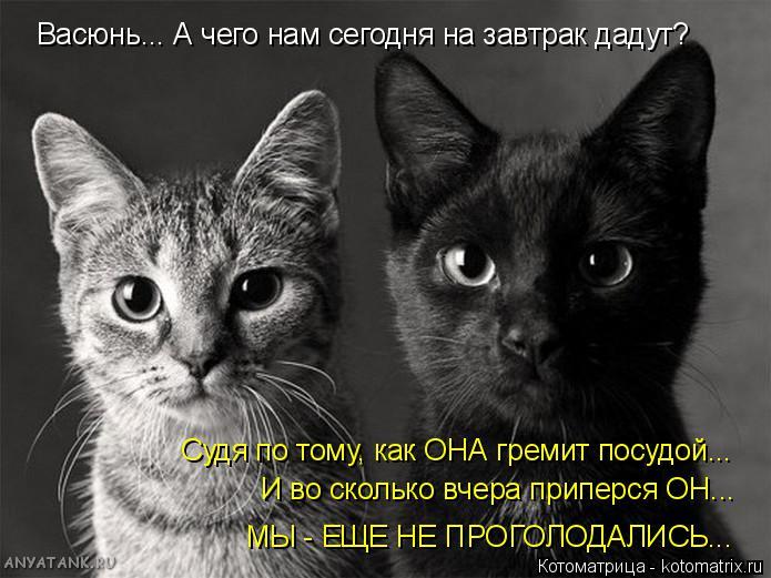 http://kotomatrix.ru/images/lolz/2014/10/14/kotomatritsa_JL.jpg