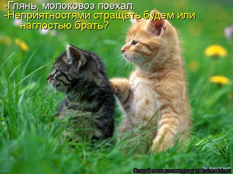 http://kotomatrix.ru/images/lolz/2014/10/14/kotomatritsa_S.jpg