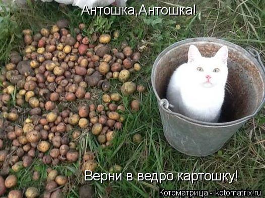 Котоматрица: Антошка,Антошка! Верни в ведро картошку!