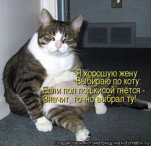 Котоматрица: Я хорошую жену Выбираю по коту: Если пол под кисой гнётся -  Значит, точно выбрал ту!