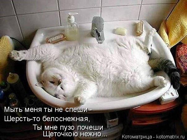 Котоматрица: Мыть меня ты не спеши - Шерсть-то белоснежная, Ты мне пузо почеши Щеточкою нежно...
