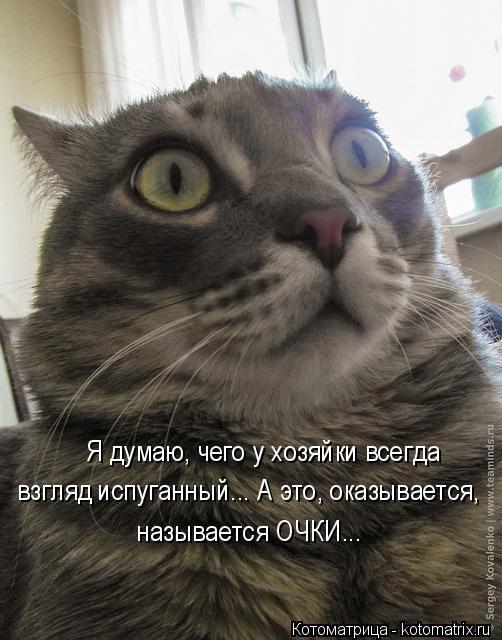 Котоматрица: Я думаю, чего у хозяйки всегда  взгляд испуганный... А это, оказывается, называется ОЧКИ...