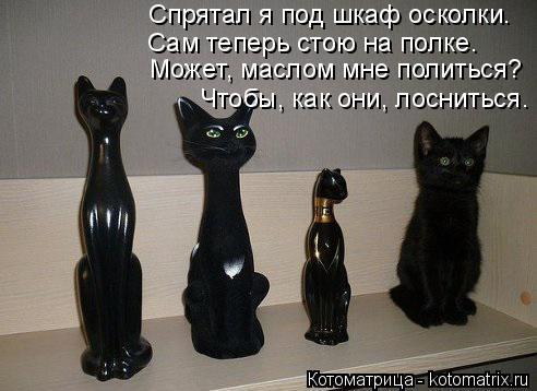 Котоматрица: Сам теперь стою на полке. Может, маслом мне политься?  Чтобы, как они, лосниться.  Спрятал я под шкаф осколки.