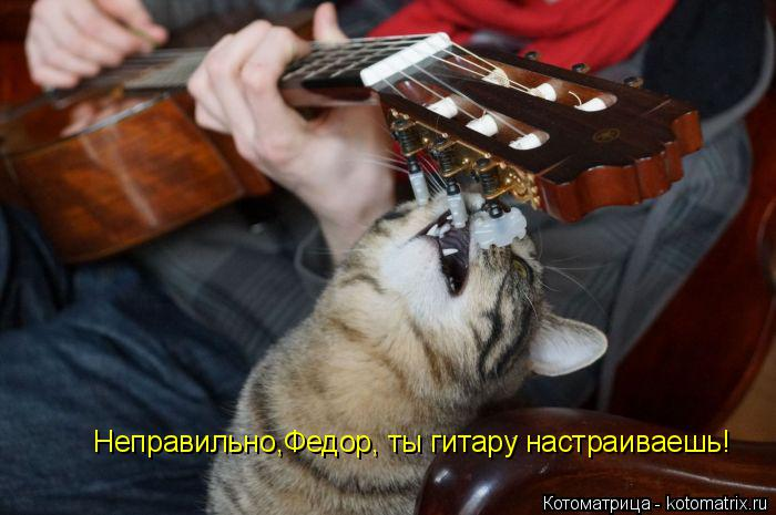 Котоматрица: Неправильно,Федор, ты гитару настраиваешь!