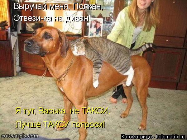 Котоматрица: Выручай меня, Полкан, Отвези-ка на диван! Я тут, Васька, не ТАКСИ, Лучше ТАКСУ попроси!
