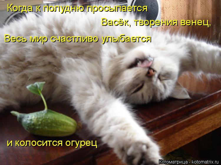 Котоматрица: Когда к полудню просыпается Васёк, творения венец, Весь мир счастливо улыбается и колосится огурец