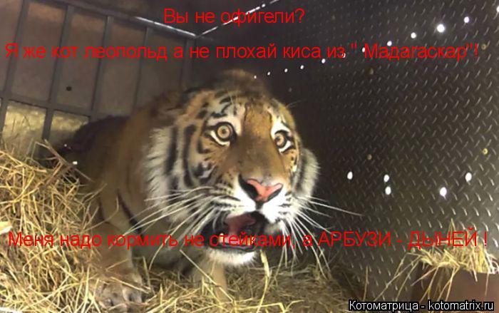 """Котоматрица: Вы не офигели? Я же кот леопольд а не плохай киса из """" Мадагаскар""""! Меня надо кормить не стейками, а АРБУЗИ - ДЫНЕЙ !"""