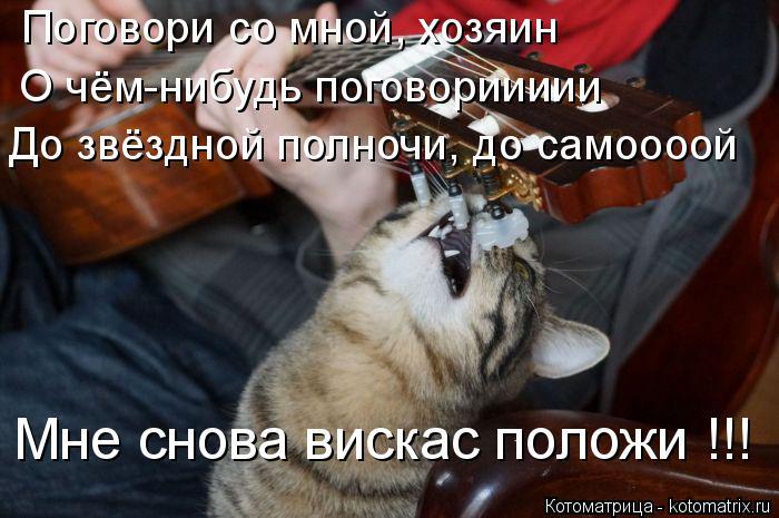 Котоматрица: Поговори со мной, хозяин О чём-нибудь поговориииии До звёздной полночи, до самоооой Мне снова вискас положи !!!