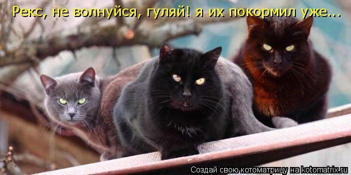 Котоматрица: Рекс, не волнуйся, гуляй! я их покормил уже...