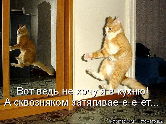 Котоматрица: Вот ведь не хочу я в кухню! А сквозняком затягивае-е-е-ет...