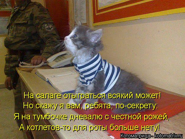 http://kotomatrix.ru/images/lolz/2014/10/18/kotomatritsa_zS.jpg