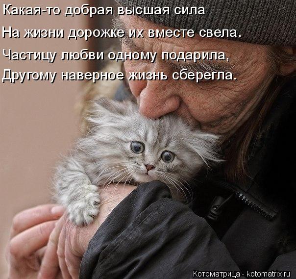 Котоматрица: Какая-то добрая высшая сила На жизни дорожке их вместе свела. Частицу любви одному подарила, Другому наверное жизнь сберегла.