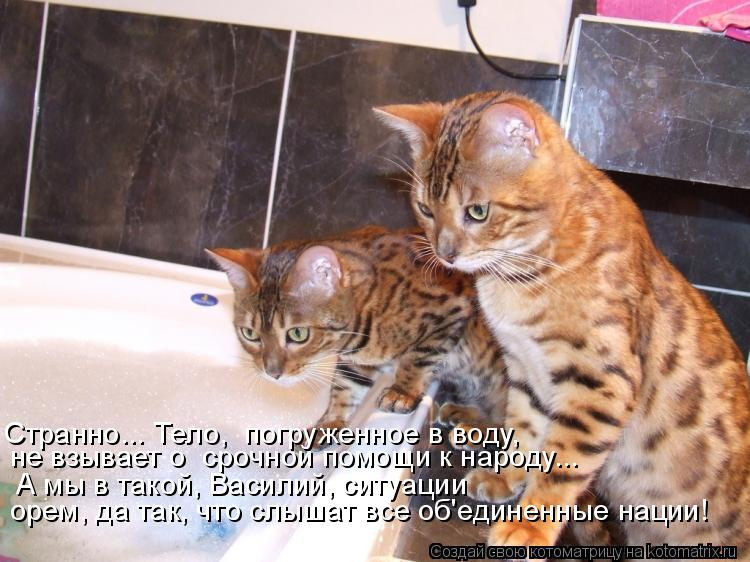 http://kotomatrix.ru/images/lolz/2014/10/19/kotomatritsa_Hi.jpg