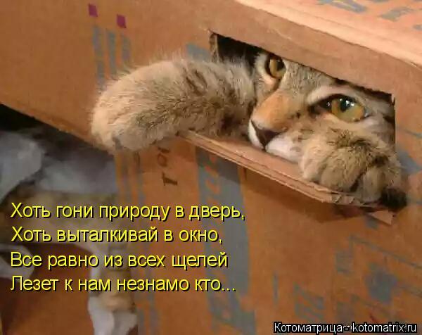 Котоматрица: Хоть гони природу в дверь, Хоть выталкивай в окно, Все равно из всех щелей Лезет к нам незнамо кто...