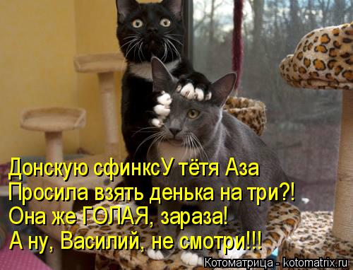 Котоматрица: Донскую сфинксУ тётя Аза Просила взять денька на три?! Она же ГОЛАЯ, зараза! А ну, Василий, не смотри!!!