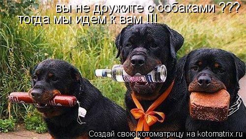 Котоматрица: вы не дружите с собаками ??? тогда мы идем к вам !!!