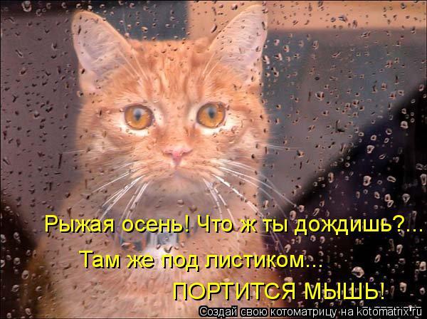 Котоматрица: Рыжая осень! Что ж ты дождишь?... Там же под листиком...  ПОРТИТСЯ МЫШЬ!