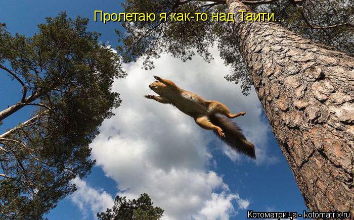 Котоматрица: Пролетаю я как-то над Таити...