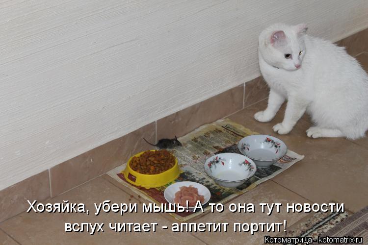Котоматрица: Хозяйка, убери мышь! А то она тут новости вслух читает - аппетит портит!