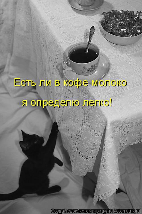 Котоматрица: Есть ли в кофе молоко я определю легко!