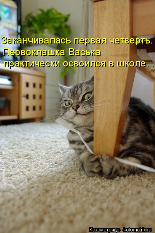 Котоматрица: Заканчивалась первая четверть. Первоклашка Васька  практически освоился в школе...