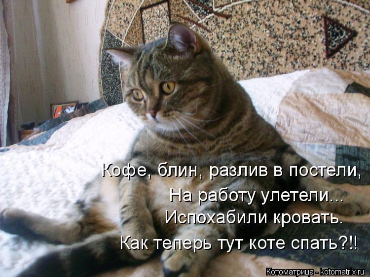 Котоматрица: Кофе, блин, разлив в постели, На работу улетели... Испохабили кровать. Как теперь тут коте спать?!!