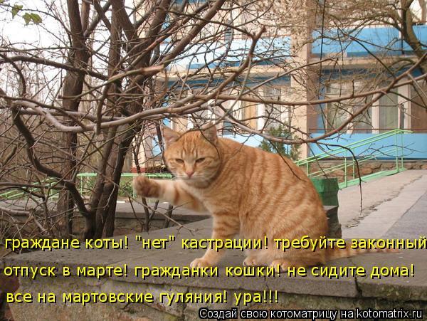 http://kotomatrix.ru/images/lolz/2014/10/21/kotomatritsa_8h.jpg