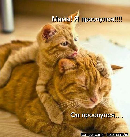 Котоматрица: Мама! Я проснулся!!!! Он проснулся....