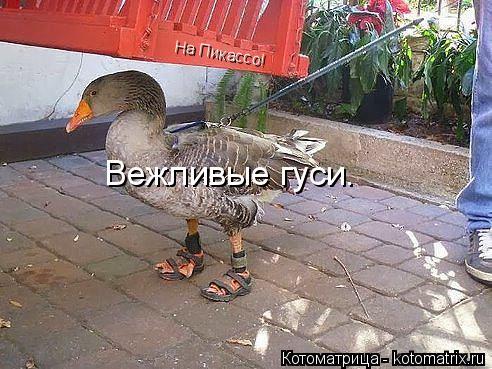 Котоматрица: Вежливые гуси. На Пикассо!