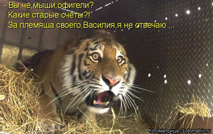 Котоматрица: - Вы чё,мыши,офигели? Какие старые счёты?! За племяша своего,Василия,я не отвечаю ...