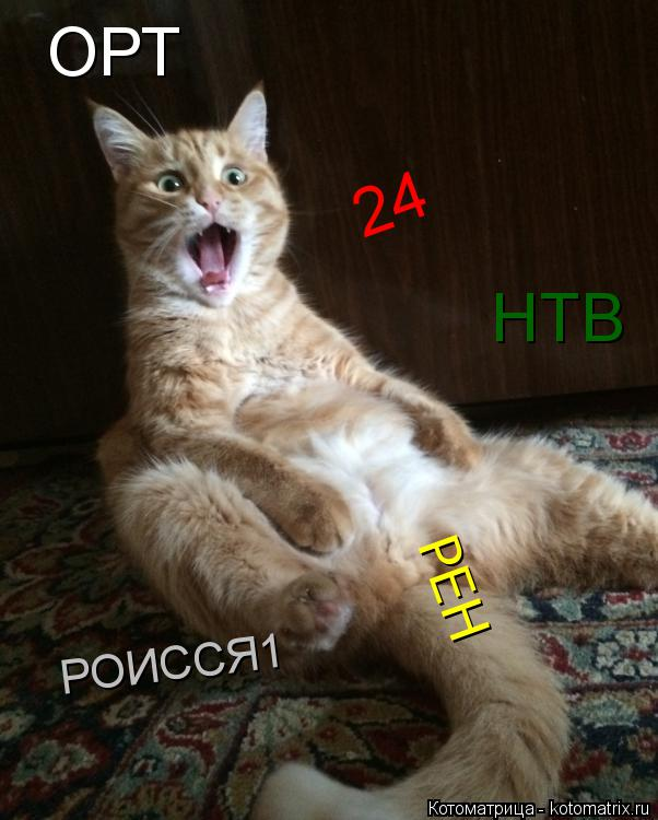 Котоматрица: ОРТ НТВ 24 РЕН РОИССЯ1